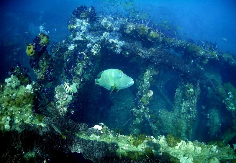 Great Barrier Reef Australia
