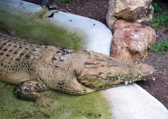 Crocodile Farm in Darwin