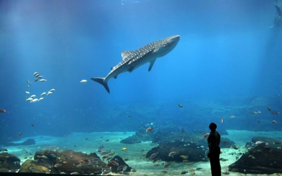 Aquariums Best Places For Summer Family And Affordable