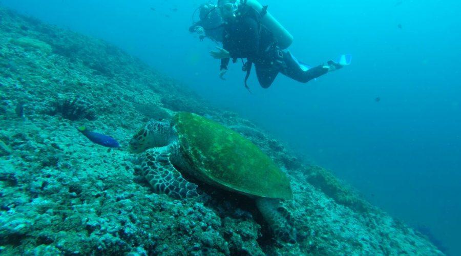 Oman diving