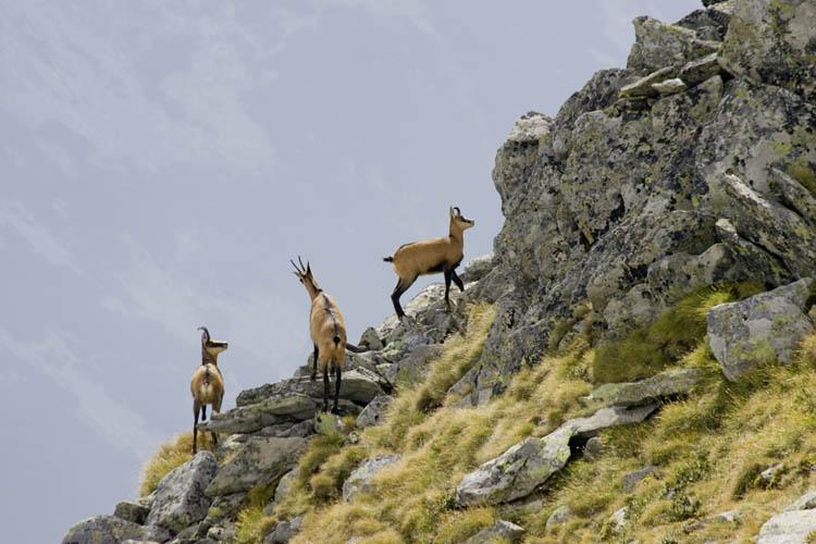 Retezat National Park
